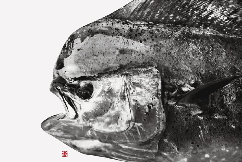 デジタル魚拓 カラー魚拓 アート魚拓