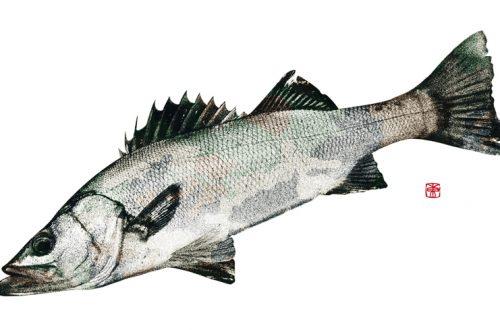 デジタル魚拓 カラー魚拓