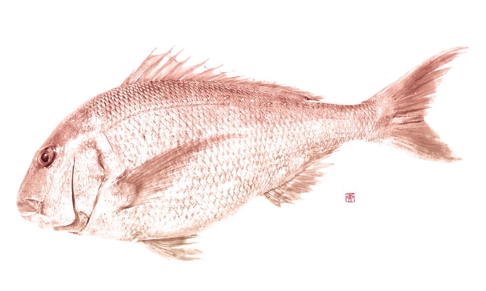 デジタル魚拓 カラー魚拓 アート魚拓 デザイン魚拓